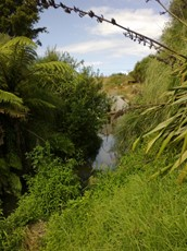 Rocky Stream at Mangatawa Lane (1)