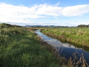 Awapuni Drain at Site 4