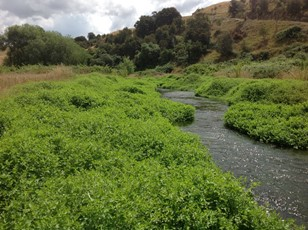 Waitio Stream at Ohiti Rd macrophytes