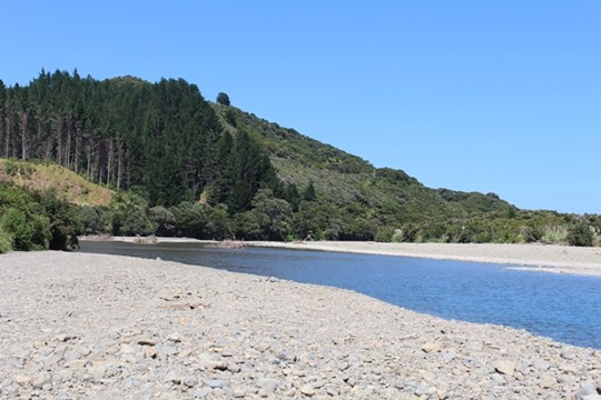 Haparapara at SH35 (Main photo)