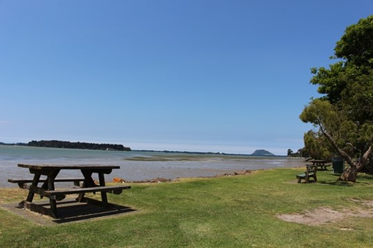 Tauranga Harbour at Te Puna Waitui Reserve (Main photo
