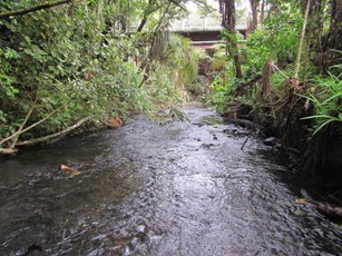 Huatoki Stream at Huatoki Domain