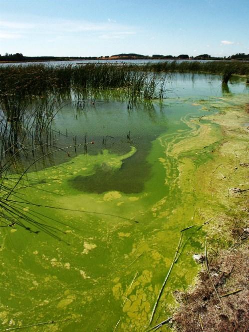 Land Air Water Aotearoa Lawa Potentially Toxic Algae