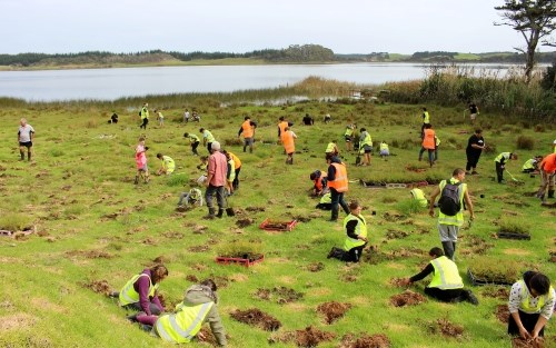 People planting by lake's edge.